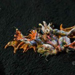 Gargoyle (Polymer Clay Skuolptur_7cm-hoch)